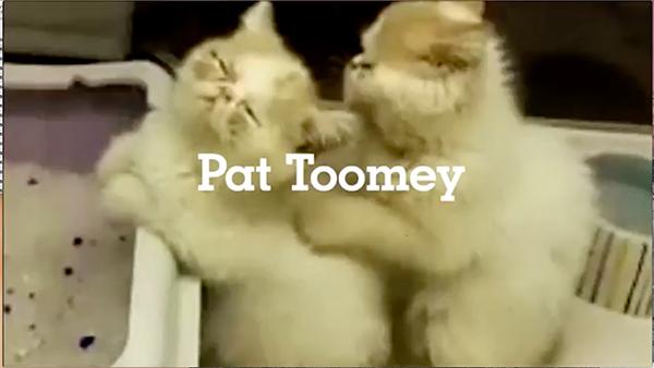 TOOMEY KITTENS